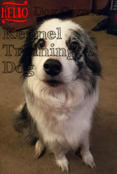 Kennel training is useful with youthful dogs and also older puppies with stress and anxiety issues. The greatest goal regarding crate exercising is trying to keep your dog away from harms approach. Kennel Training A Dog, Crate Training, Dog Training Tips, Stress And Anxiety, Have Fun, Image Link, Advice, Puppies, Pets