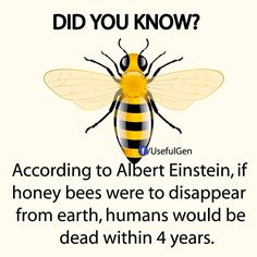 Foods That Won't Exist Without the Bee Population >save these hecking amazing bees! The Animals, The More You Know, Did You Know, Bee Facts, Save Our Earth, Bee Friendly, Wtf Fun Facts, Random Facts, Animal Facts