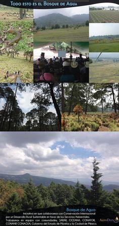 #BosqueDeAgua: región de alta importancia #biológica. Abastece de #agua a más de 22 millones de habitantes. #DMMA2015