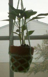 Mini Crochet Plant Hangers | AllFreeCrochet.com