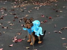#airedale terrier puppy #trick or treat #happy halloween