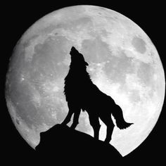 Wolves choose one mate to love for their whole lives....I get that, I really do because of you.