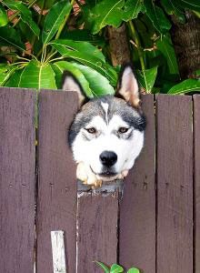 Training Your Dog or Puppy Not to Bolt Out of Doors or Gates