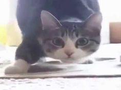 Gato dançando - YouTube