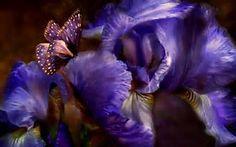 Iris Flowers, Butterfly Flowers, Flowers Gif, Blue Butterfly, Butterfly Pictures, Drawing Flowers, Butterfly Watercolor, Butterfly Kisses, Beautiful Butterflies
