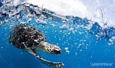 Support ocean sanctuaries