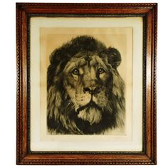 Large Herbert Dicksee Etching of Lion | From a unique collection of antique and modern prints at https://www.1stdibs.com/furniture/wall-decorations/prints/