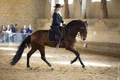 Lusitano Nilo des Frettes  Working Equitation  Equitation de Travail / dressage  copyright Pascale Scherrer