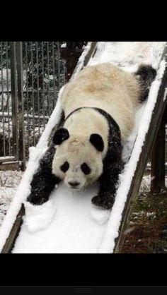 Aww love pandas!