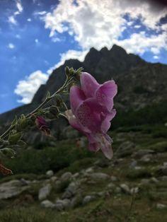 Blogg - Plants, Plant, Planets