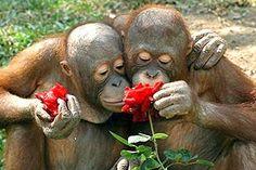 Dia dos namorados animais