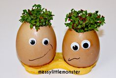 preschool growing activity cress heads using egg shells and cotton wool