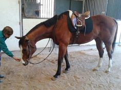 For sale 5 year old thoroughbred