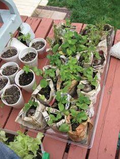 $1 Garden
