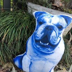 English Bulldog Blue pillow Blue Throw Pillows, Kids Pillows, Decorative Cushions, Take Me Home, Soft Hands, Bulldogs, All The Colors, Happy Shopping, English