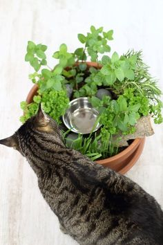 DIY cat garden for home cats - DIY & Upcycling Gruppe - Tiere und Heimtierbedarf Diy Jardim, Gatos Cats, Garden Animals, Cat Garden, Cats Diy, Cat Pillow, Sleeping Dogs, Homemade Stuffed Animals, Cat Health