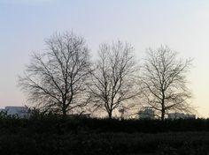 Trois+arbres+nantais+:+au+petit+déjeuner. Que+voulaient-ils+me+dire+?+Qu'avais-je+à+leur+avouer+?  [Nantes,+dimanche+28+décembre+2008]+ +gilda_f