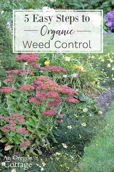 2093 Best Garden Images In 2020 Garden Plants Outdoor Gardens