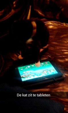 Zelfs de kat zit op de tablet