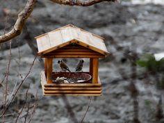 Aves, Comedero Para Pájaros, Pájaros, Jilguero