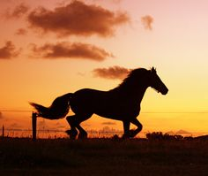 Horse running sunset