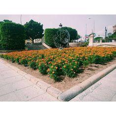 Plaza #Glorieta de #España #Murcia.  #Flores 31 de Agosto.  #Spain #Summer #flowers #Sun