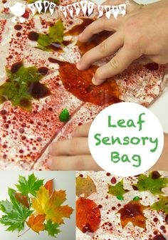 LEAF SENSORY BAGS are a beautiful way to explore leaves in Fall. A fantastic hands-on, tactile, and mess-free sensory experience for kids.
