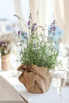 Levendula dekoráció via pinterest.com Lavender Centerpieces, Lavender Decor, Succulent Wedding Centerpieces, Simple Centerpieces, Wedding Table Centerpieces, Wedding Decorations, Potted Plant Centerpieces, Potted Plants, Potted Lavender