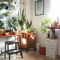 Plants (@succulents_etc)