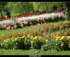 Flores en la Taconera de Pamplona.