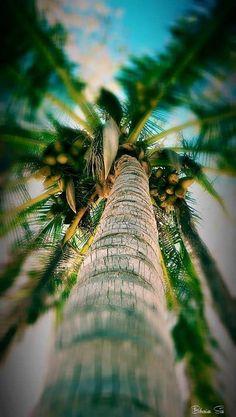 Обои iPhone wallpaper palms