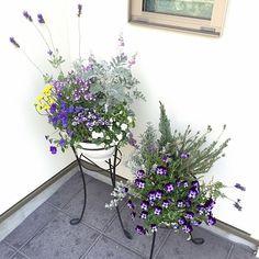 4LDKで、家族の、玄関/入り口/ガーデン/寄せ植え/ラベンダー/ビオラ/フラワーについてのインテリア実例。 「花にハマって半年!ど...」 (2016-05-04 08:47:01に共有されました) Garden Paths, Garden Landscaping, Small Garden Design, Garden Styles, Pansies, Container Gardening, Flower Designs, Shrubs, Flower Pots