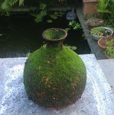 Mossy  Olla Water Plants, Water Garden, Hydrangea Petiolaris, Bug Hotel, Earthship, Garden Pests, Edible Flowers, Clay Pots, Irrigation