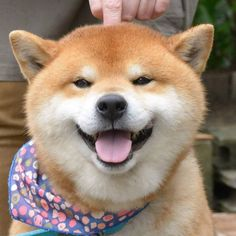 Meet Ryuji, The Most Expressive Shiba Inu From Japan Baby Dogs, Pet Dogs, Dog Cat, Shiba Inu, Akita, Cute Puppies, Dogs And Puppies, Animals And Pets, Cute Animals
