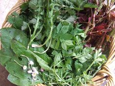 9 common wild edible plants, one afternoon's harvest