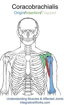Understanding Trigger Points - Pain while pitching or reaching behind your body