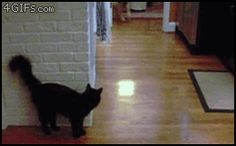 cat stalking dog gif