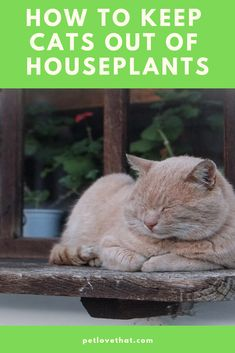 Cats love to destroy houseplants. The feline instinct enjoys chewing green leaves or knocking the whole case to the floor leaving a big mess to clean up. Jungle Cat, Cat Behavior, How Do I Get, Back Off, Litter Box, Coming Home, Cat Food, Crazy Cats, Colorful Flowers