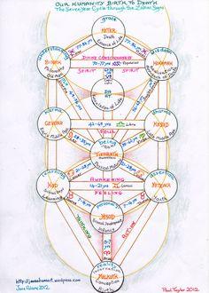 paul's 7year cycles tree