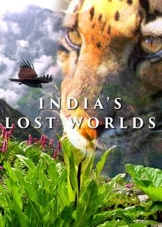 Another great series.  Netflix - instantwatcher - India's Lost Worlds