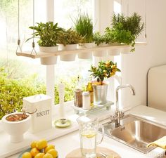 Having plants in your home will improve the air quality of your home and make it look more inviting. [Indoor Plants Potted Plants Indoor Herb Garden Small House Plants Comfortable Home Decor Improving House Comfort Plants In Kitchen Brighten Up Your Home] Kitchen Plants, Home Decor Kitchen, Home Kitchens, Kitchen Dining, Herbs In Kitchen, Kitchen Ideas, Kitchen Cupboard, Small Kitchens, Kitchen Interior