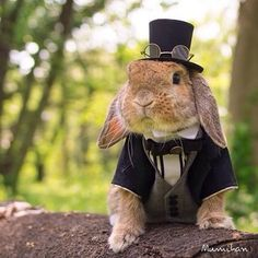 Mumitan proved to be the most dapper bunny of the year. | 23 Fashionable Animals Who Won 2014