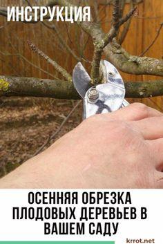[Инструкция] Осенняя Обрезка Деревьев: Сроки и Описание