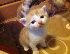 I iz cuter than da rest of 'em. Pick me, k?