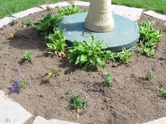 We planted some Hastas; and we planted a few flowers around the birdbath that was sitting on top of our septic tank cover. Outdoor Decor, Flower Garden, Garden Design, Plants, Outside Living, Bird Bath, Bird Houses, Septic Tank Covers, Backyard