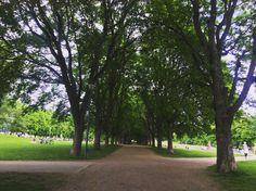 Sidewalk, City, Nature, Naturaleza, Side Walkway, Walkway, Cities, Nature Illustration, Off Grid