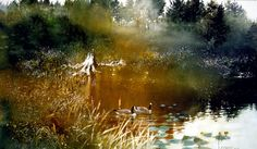 Peaceful Morning - Canadas by Nita Engle