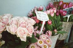 Pink and Tulips...