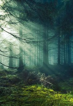 Dappled light in a mossy forest clearing | Hunter gatherer Portfolio