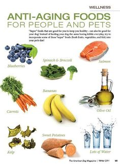 "Does your dog(s) eat any of these ""super"" foods in their diet? Incorporate some blueberries, spinach, broccoli, carrots, bananas, sweet potatoes, olive oil, kelp, or salmon into their dinner and always have lots of fresh water available also!"